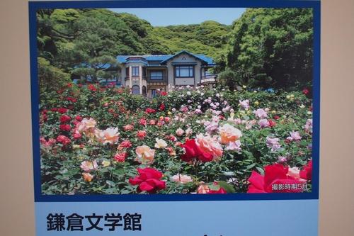 buskamakura7.jpg