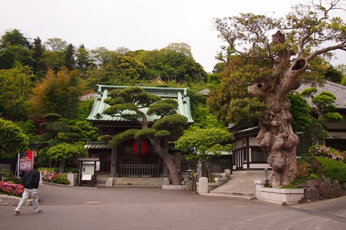 buskamakura8.jpg