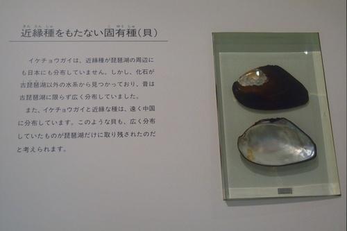 shi12museum11.jpg