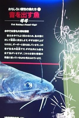 shi12museum36.jpg
