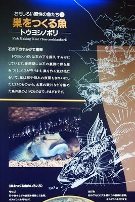 shi12museum38.jpg