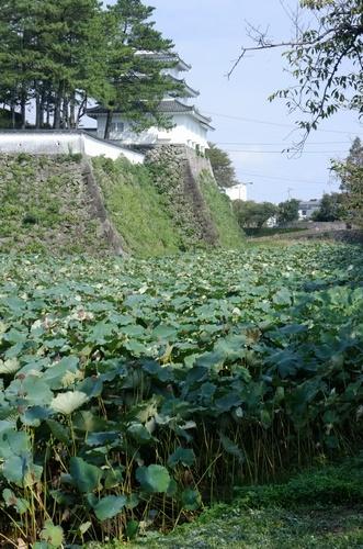shimabaras7.jpg