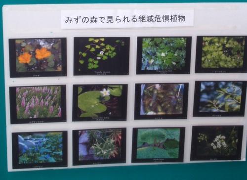 shi12mizunomori24.jpg